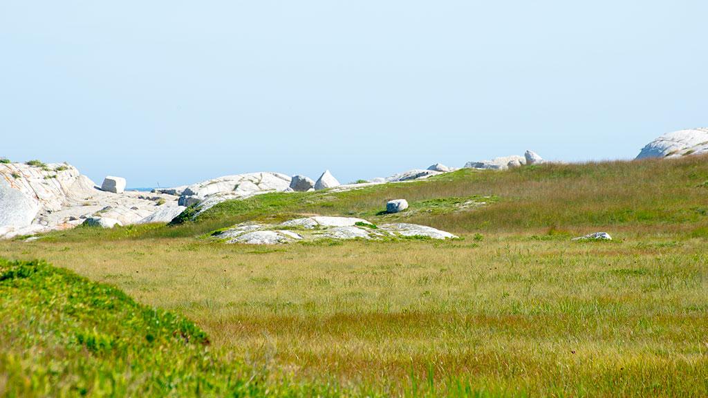 Prospect-Trail-Grass-3776