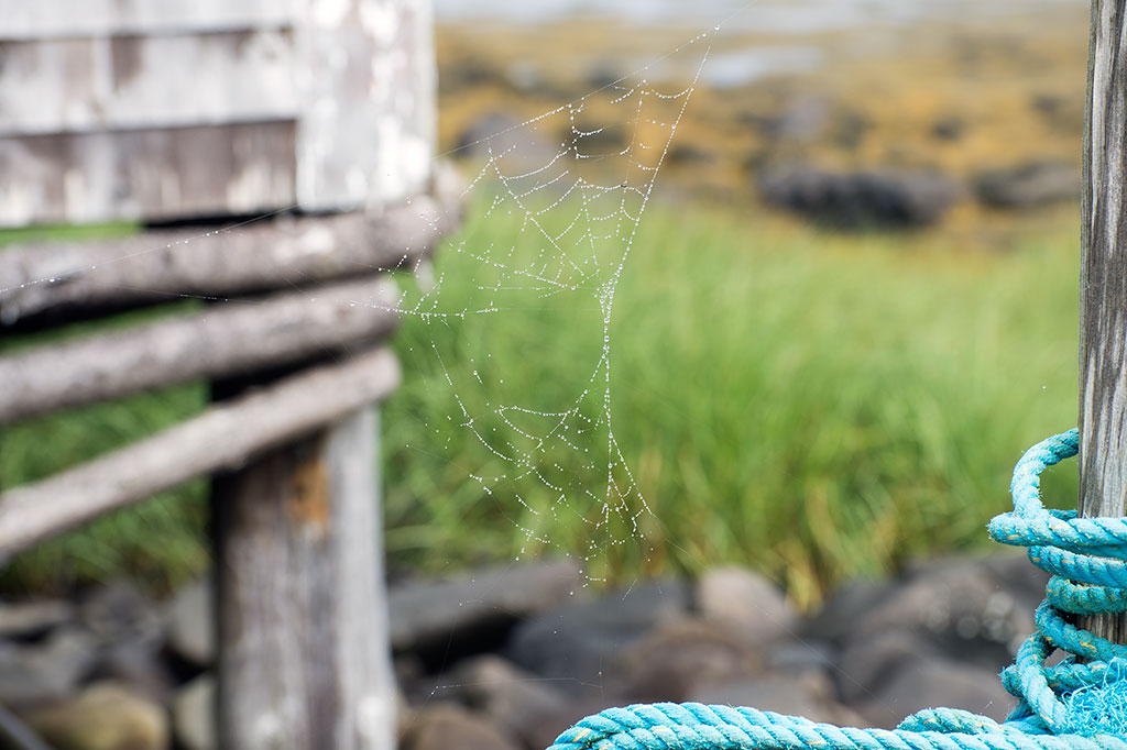 Spider Web with mist