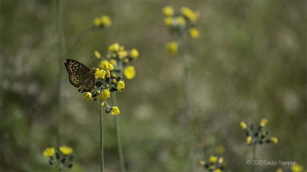 Butterfly 8728