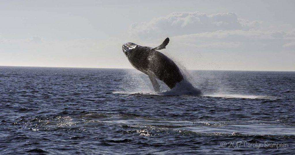 Experience Nova Scotia Whale Watching